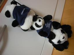 20080630-panda.jpg