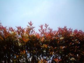 20090501-sky.jpg